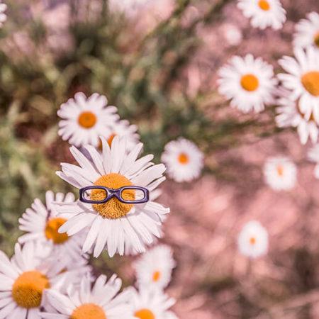 Fleur à lunettes